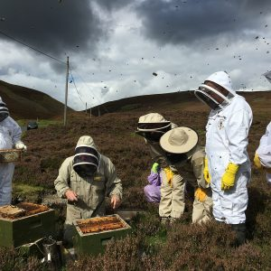 South Of scotland beekeepers - heather honey collection